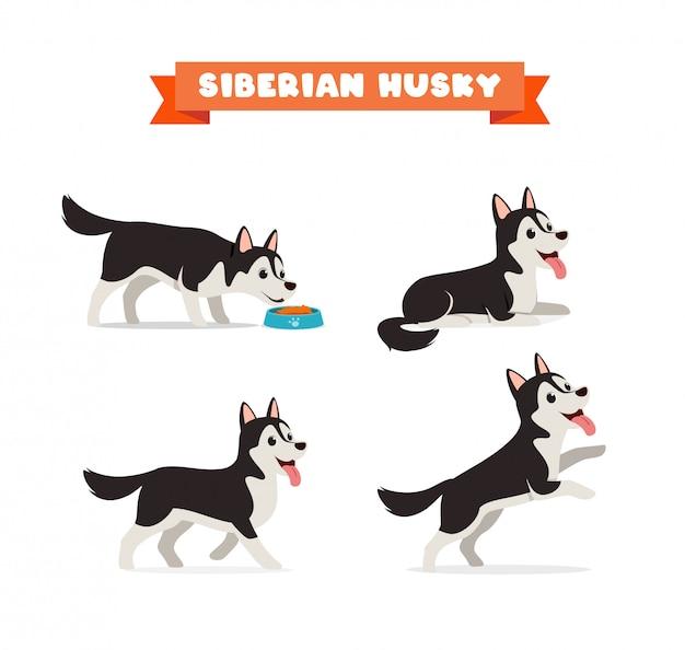 Cão husky fofo de estimação com conjunto de feixe de várias poses