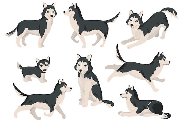 Cão husky fofo em diferentes poses conjunto plano