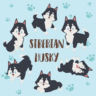 Cão husky siberiano, husky siberiano de personagem fofo, cachorro husky siberiano