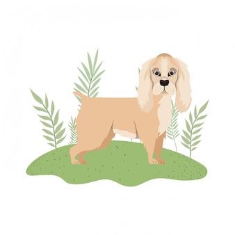 Cão inglês bonito de cocker spaniel no branco