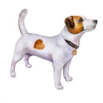 Cão jack russell terrier em aquarela