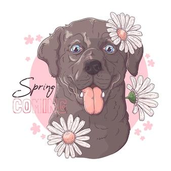 Cão labrador retriever desenhado à mão com flores