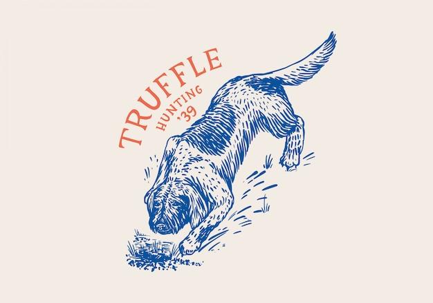 Cão lagotto romagnolo para localizar cogumelos trufas. esboço vintage desenhado mão gravada. estilo xilogravura. ilustração.