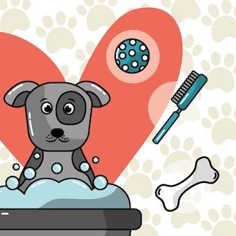 Cão, lavando, banho, animal estimação, aliciamento, cuidado