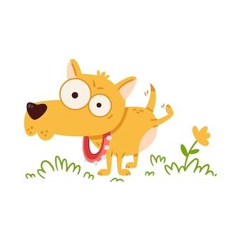 Cão pequeno com olhos grandes a fazer xixi na flor chihuahua na coleira com espinhos na caminhada