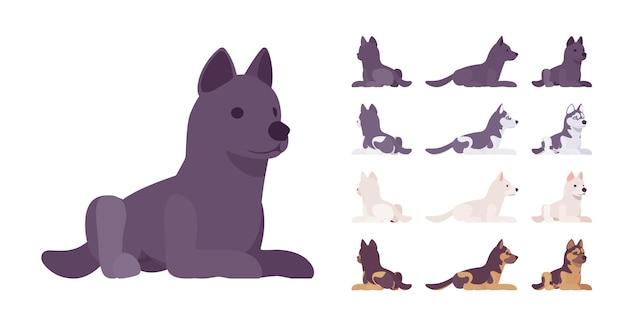 Cão preto, branco, husky, pastor deitado
