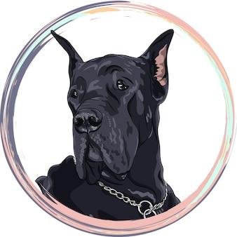 Cão preto de retrato. cão da raça dogue alemão na moldura redonda.