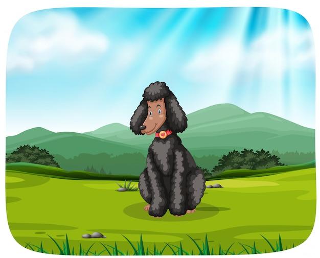 Cão sentado na grama perto da montanha