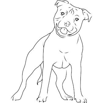Cão staffordshire bull terrier, desenho vetorial esboçado à mão