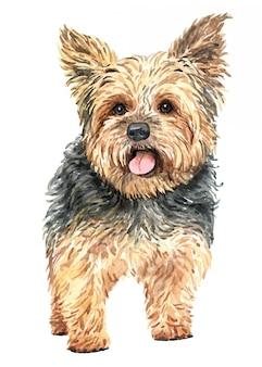 Cão tirado mão da aquarela do yorkshire terrier.