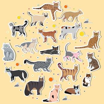 Capa de layout de gatinho diferente de coleção.
