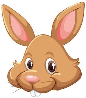Cara de coelho em fundo branco