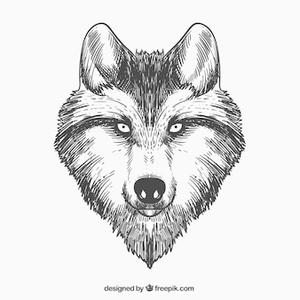 Cara de lobo desenhada à mão