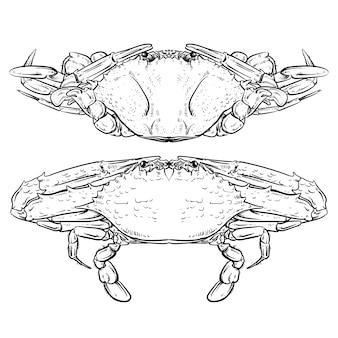 Caranguejo de desenho sobre fundo branco