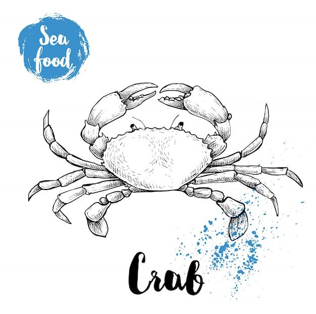 Caranguejo de esboço desenhado de mão com grandes garras. ilustração em vetor frutos do mar para menu, restaurantes ou mercados.