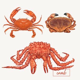 Caranguejos, mão, desenhado, ilustração