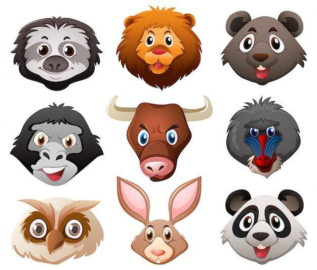 Caras de animais selvagens