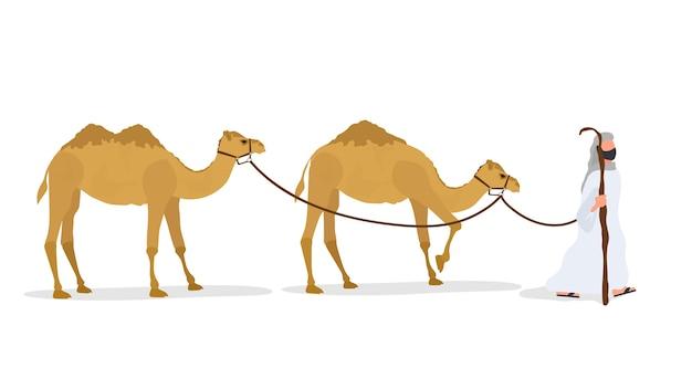 Caravana de camelos isolada no fundo branco. um pastor conduz um camelo.