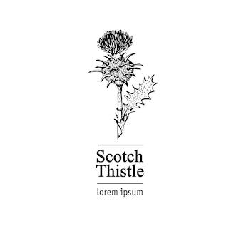 Cardo escocês. planta do logotipo do vetor