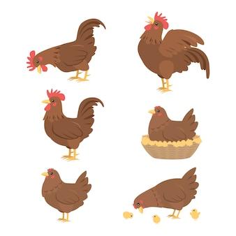 Caricatura, galo, e, galinha, vetorial