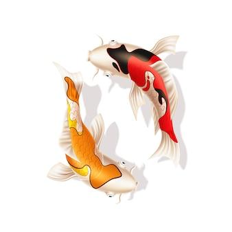 Carpas koi vector símbolo oriental de peixe realista