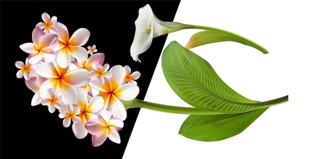 Cartão com ilustração floral. ramalhete das flores com a folha exótica isolada no fundo branco.