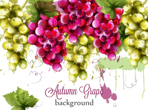 Cartão da aguarela das uvas vermelhas e brancas