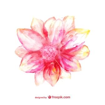 Cartão da aguarela flor rosa