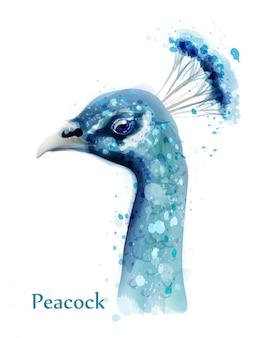 Cartão de aquarela de pavão