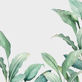 Cartão de botânica