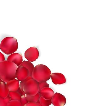 Cartão de dia dos namorados - pétalas de rosa vermelhas.