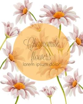 Cartão de flores de camomila com lugar para texto em um círculo cheio de ouro