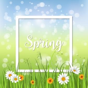 Cartão de primavera com camomila florescendo com moldura