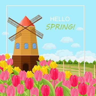 Cartão de primavera com tulipas e uma ilustração de moinho