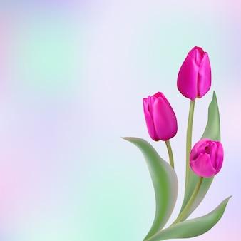 Cartão de tulipas
