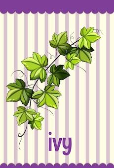 Cartão de vocabulário com a palavra ivy Vetor grátis