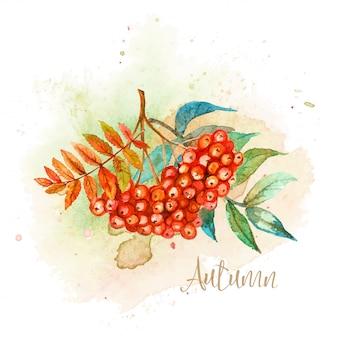 Cartão postal de aquarela outono com um raminho de rowan