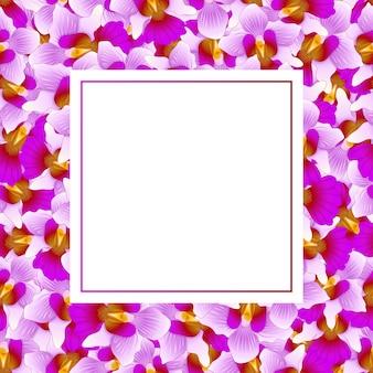 Cartão roxo da bandeira da orquídea de vanda miss joaquim