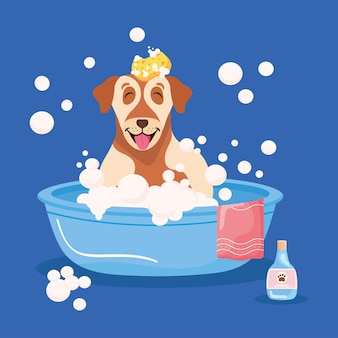 Cartaz com animal de estimação na banheira