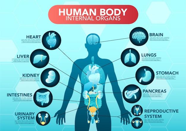 Cartaz de infográfico plana de esquema de órgãos internos do corpo humano com ícones