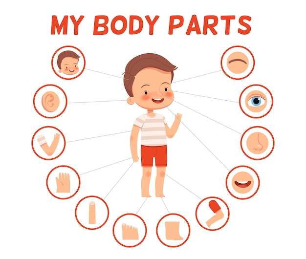 Cartaz para crianças aprendendo. menino alegre e suas partes do corpo em fotos separadas.