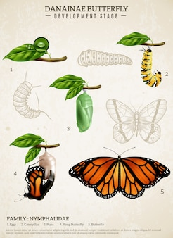 Cartaz retro da borboleta de danainae