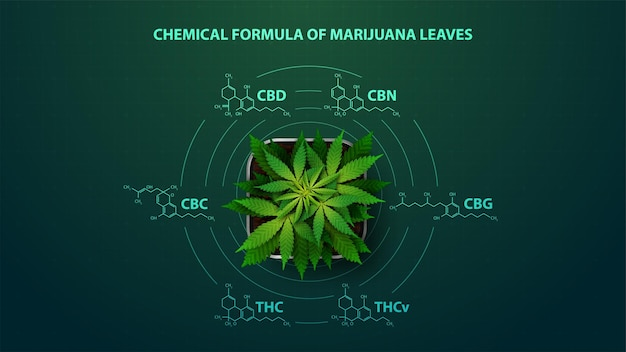 Cartaz verde com fórmulas químicas de canabinóides naturais.