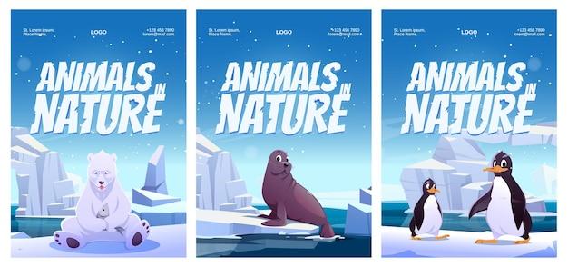 Cartazes de animais na natureza com urso polar pinguim e foca.