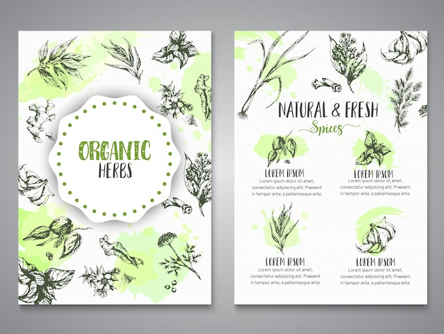 Cartazes de ervas e especiarias. erva, planta, banners de mão desenhada de especiarias, elementos de menu.