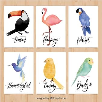Cartões bonitos com variedade de pássaros de aquarela