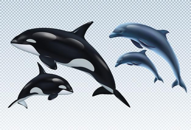 Casais de golfinhos e baleias assassinas em transparente
