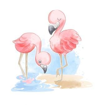 Casal bonito flamingo