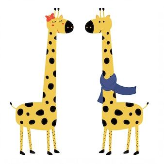Casal bonito girafa
