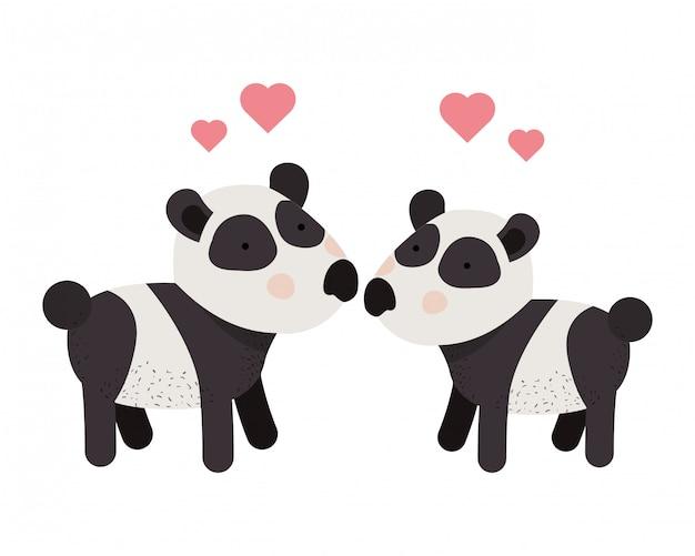 Casal bonito pandas com corações